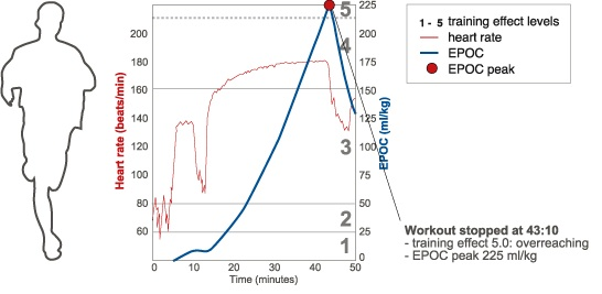 EPOC (excess post-exercise oxygen consumption) - Page 6